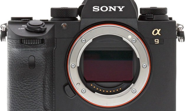 Initial Review On The Sony A9 – 2 Weeks After