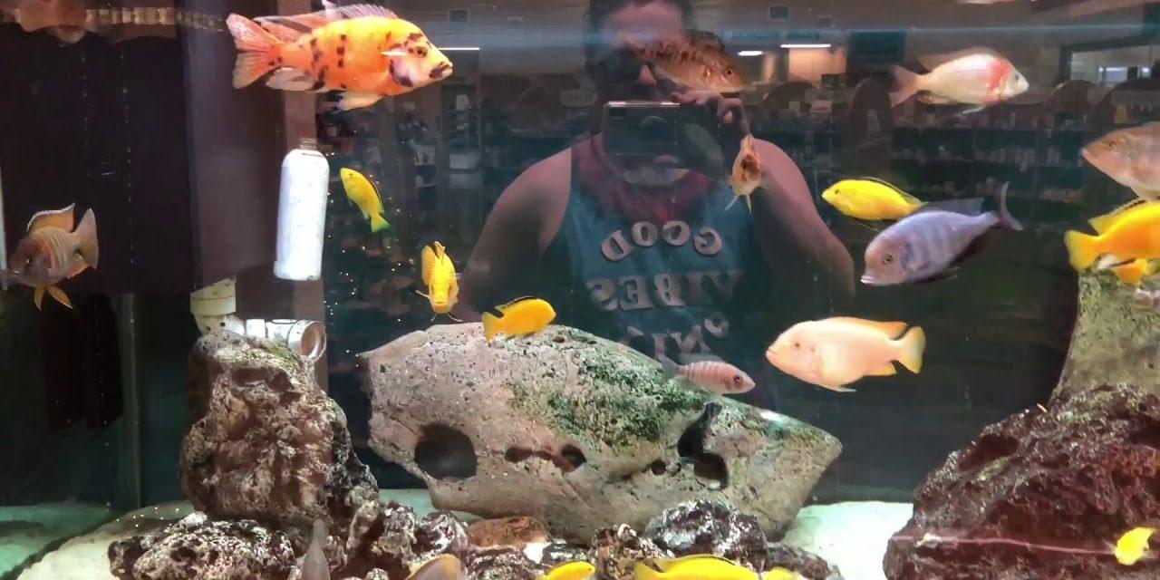 500 Gallon Cichlid Aquarium Update
