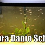 55 Gallon Zebra Danio & Black Neon Tetra Aquarium