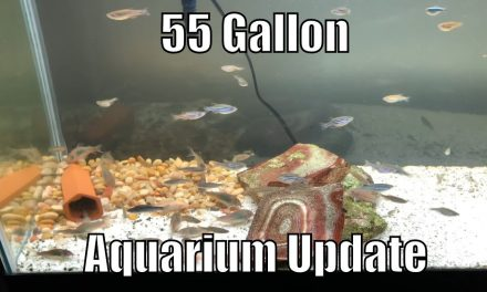 55 Gallon Freshwater Fish Tank Update – Corycats Galore!