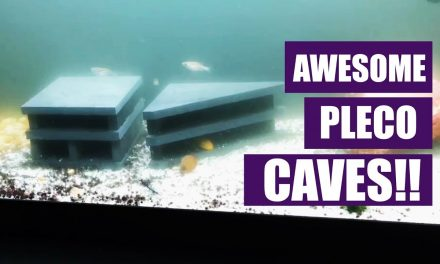 Awesome Pleco Caves | Pleco Breeding Caves!