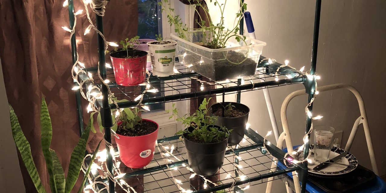 DIY Christmas Light Plant Growing Shelving