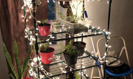 DIY Christmas Light Plant Growing Shelving