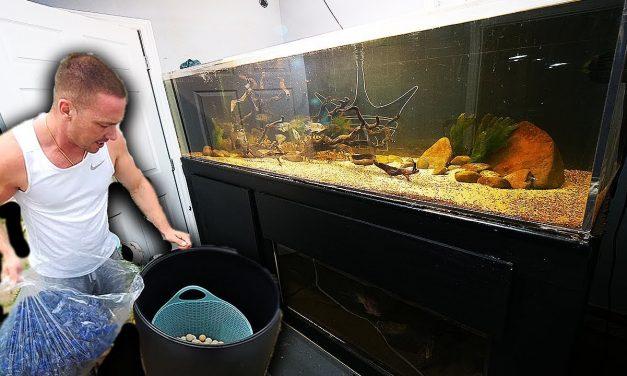 Large DIY aquarium filter for $50
