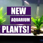 New Aquarium Plants! – 55 Gallon Aquarium Update