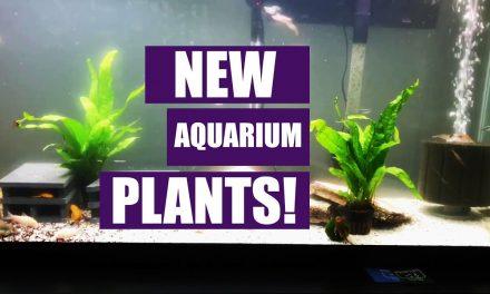New Aquarium Plants! – 55 Gallon Aquarium Update