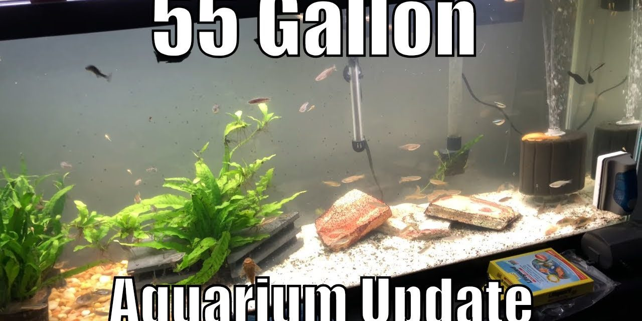 55 Gallon Aquarium Update – Albino Pleco Babies Everywhere