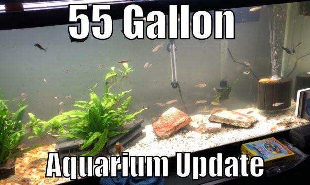 55 Gallon Aquarium Update – Albino Pleco Babies Everywhere