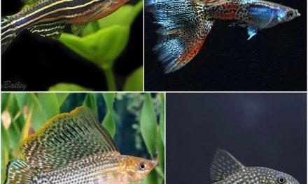 Fish Breeding Tips + Easy To Breed Fish