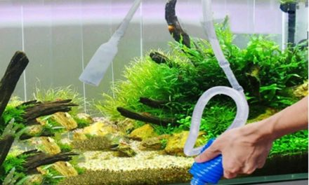 Regular Aquarium Maintenance – Your Fish Will Thank You!