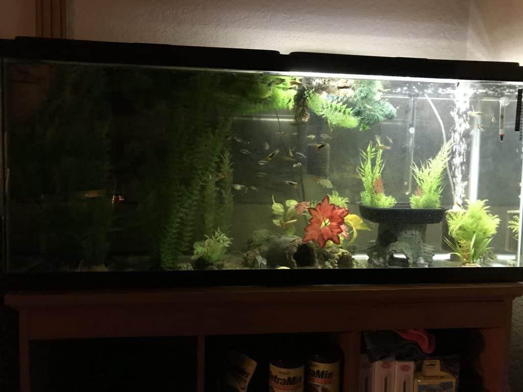 Starting Your First Aquarium