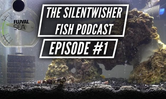The Silentwisher Fish Podcast Ep. #1 – Our Current Aquariums