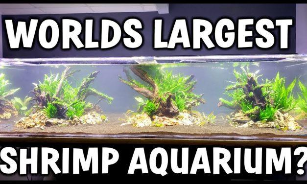 Worlds LARGEST Shrimp Aquarium! – Aquascape and Setup