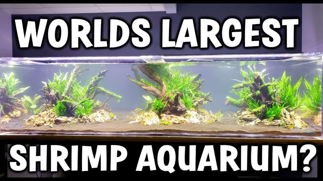 Worlds LARGEST Shrimp Aquarium! - Aquascape and Setup ...