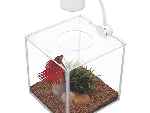 My Review Of The Marina CUBUS Glass Betta Kit