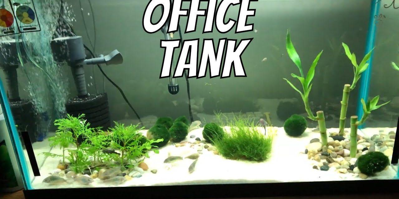 My Corycat & Guppy Office Fish Aquarium