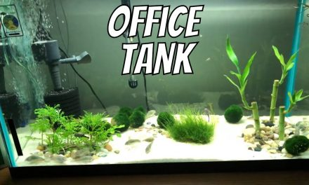 My Corycat & Guppy Office Fish Aquarium