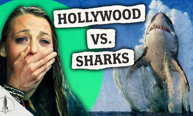 Are you afraid of sharks? You probably shouldn't be.