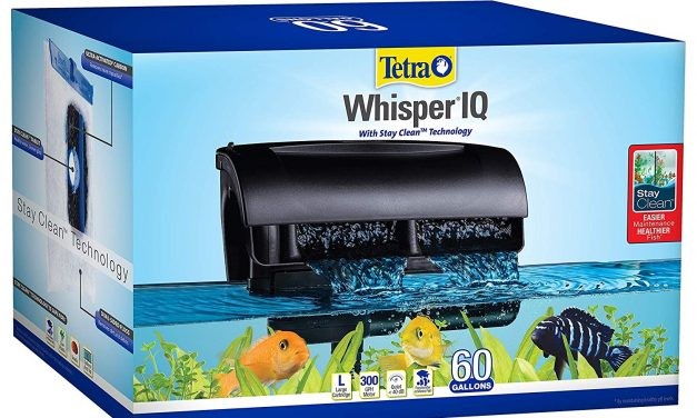 Whisper IQ Power Filter for Aquariums | REVIEW