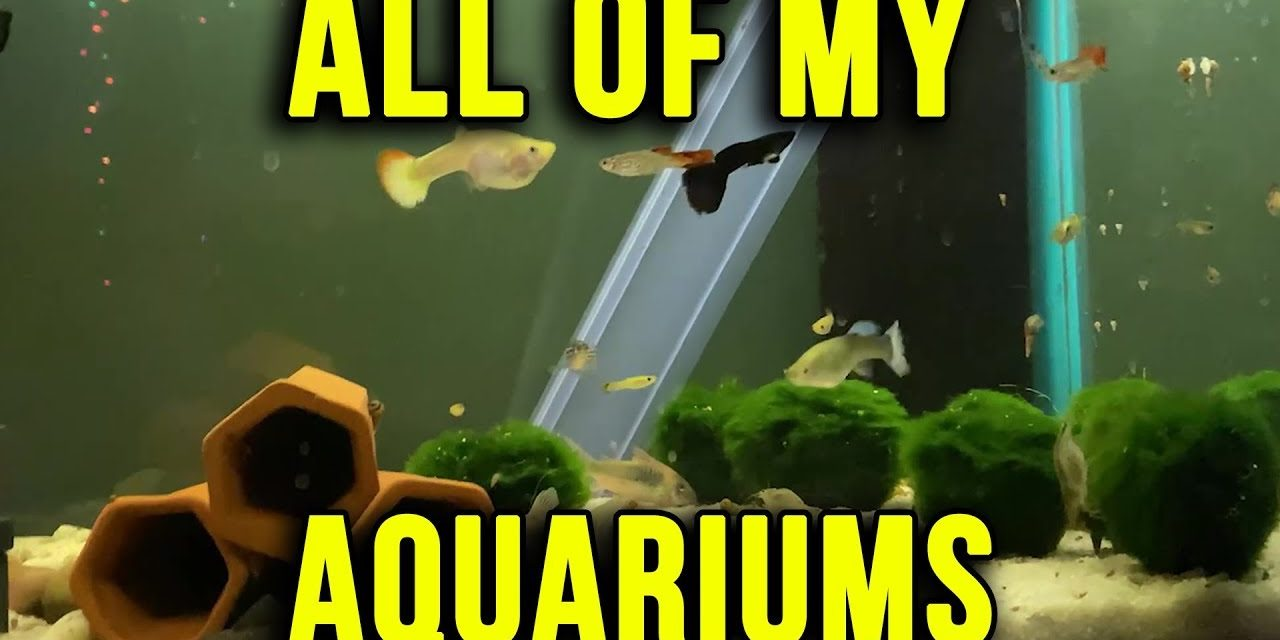 All Of My Aquariums Update 12.2.2019