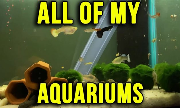 All Of My Aquariums Update 12.2.2019