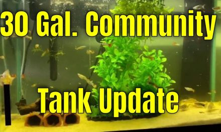 30 Gallon Community Tank Update & I want your questions!