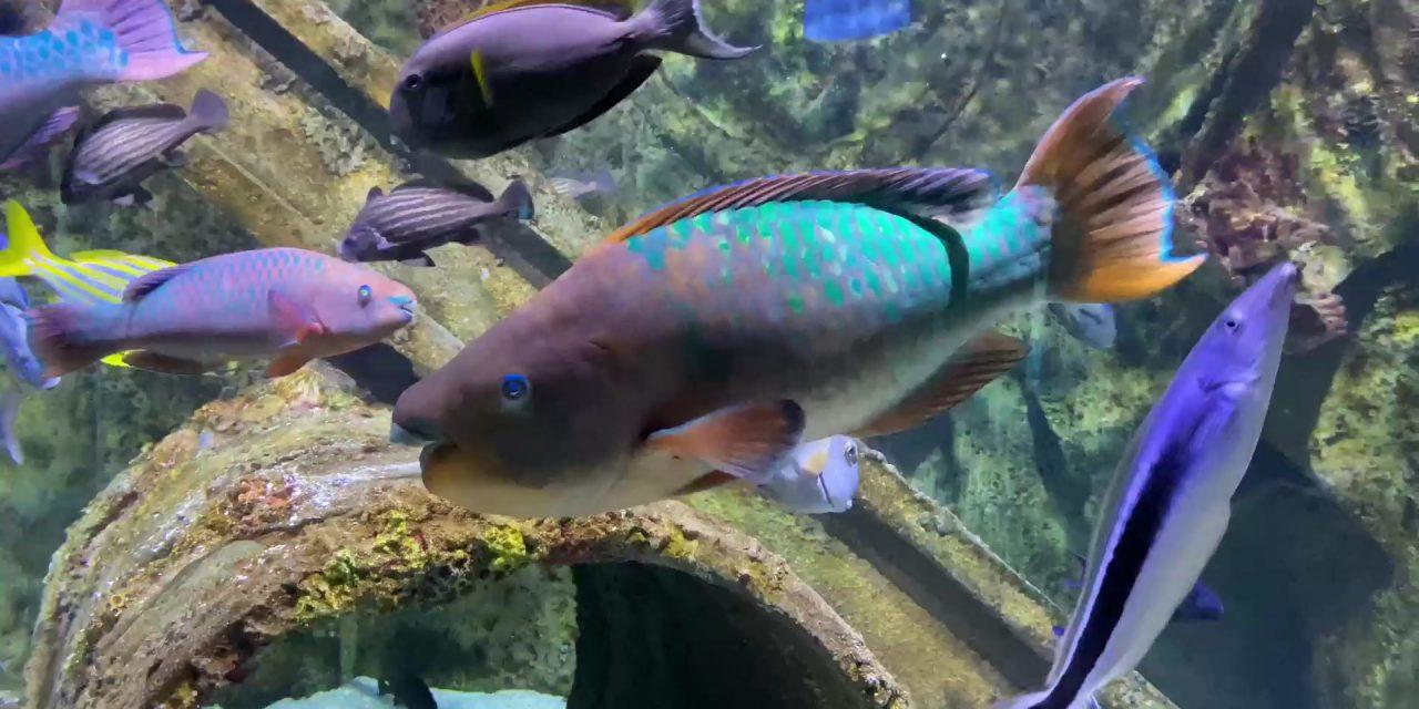 Awesome Aquarium! | Wonders Of Wildlife National Museum & Aquarium