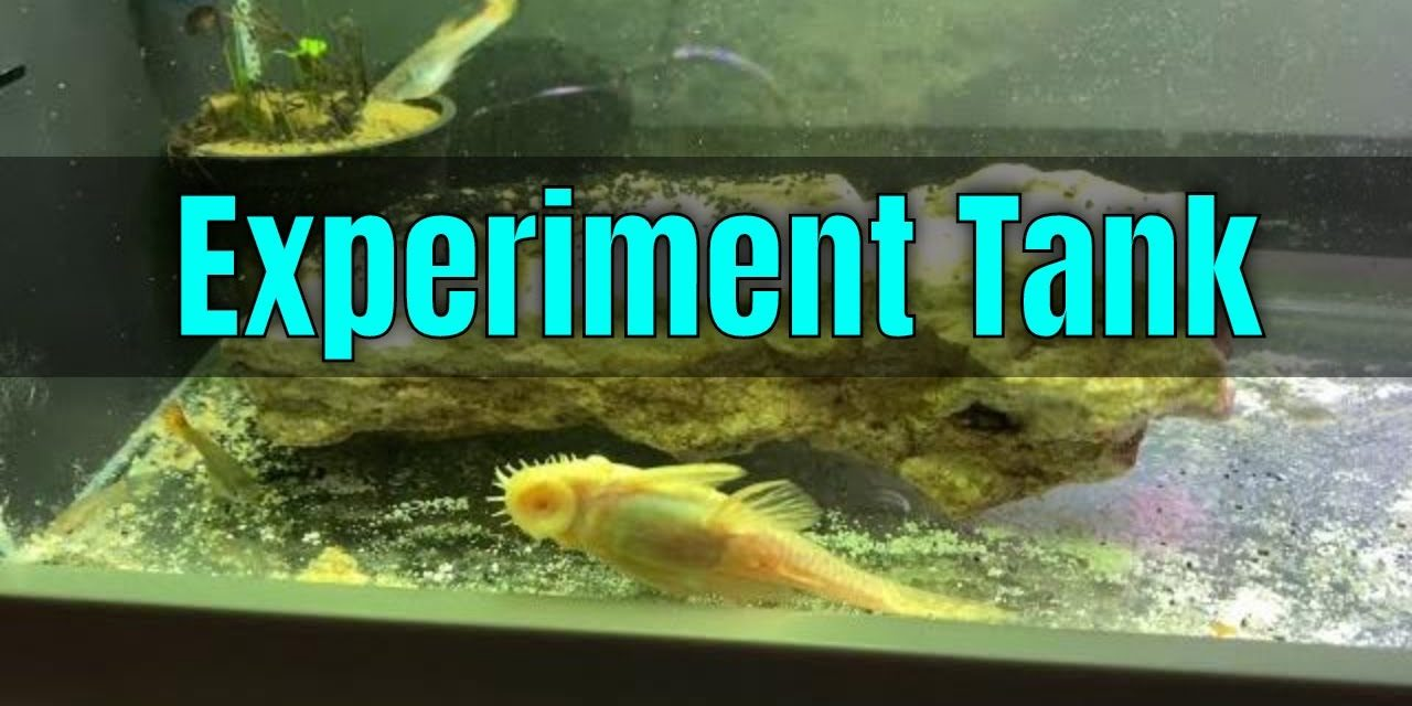 5 Gallon Experiment Aquarium/Tank – YouTube