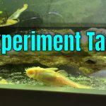 5 Gallon Experiment Aquarium/Tank – YouTube